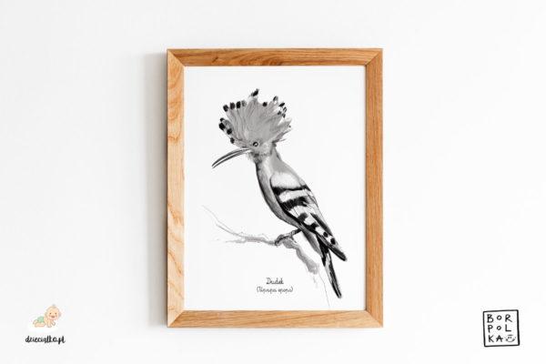 narysowany dudek – artystyczny plakat