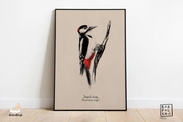 narysowany dzięcioł duży – artystyczny plakat